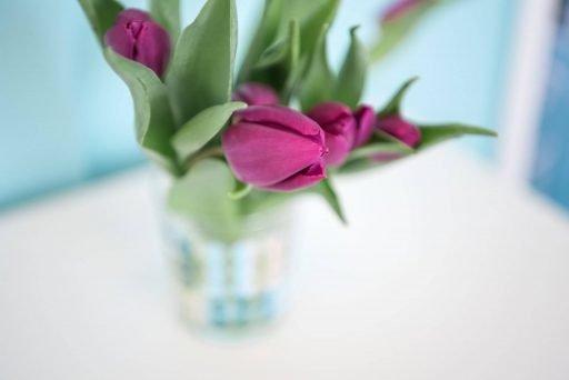 Violette Blumen als Dekoration in der Hebammenpraxis An der Mühlenau